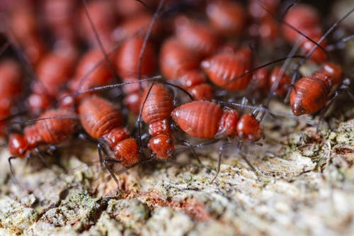 Important things to know about termite control in your home