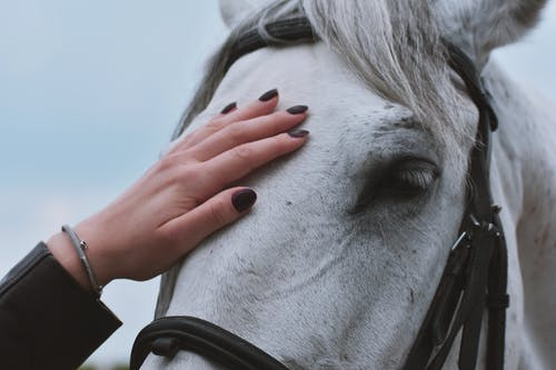 Things to consider before you decide to own a horse
