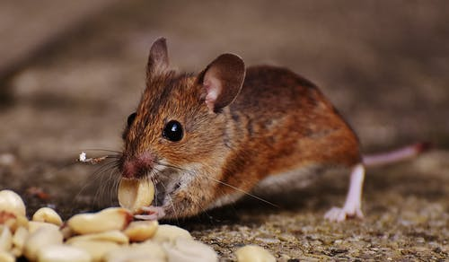 4 tips on choosing the best rodent control services